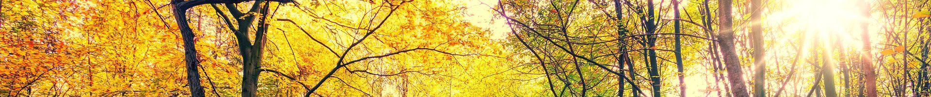 Herbstliches Hintergrundbild Praxis Dr. Cynthia Quiroga Murcia